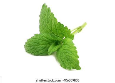 green mint leaves on a white background