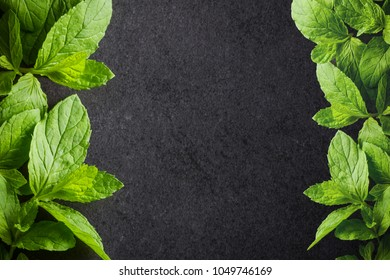Green mint leaves in studio isolated on black surface. Empty copy space food background.