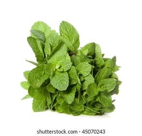 Green mint on white ground