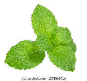 green mint pepper leaf isolated on white background
