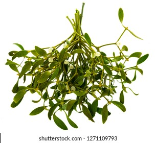 green mistletoe isolated on a white background