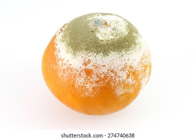 a green Mold on orange ugly musty