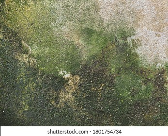 Green Mold wall background texture Mold wall texture backgrounds, The wall needs repair. House. Fence. Floor. Ceiling. Mold. Fungus. Corrosion.