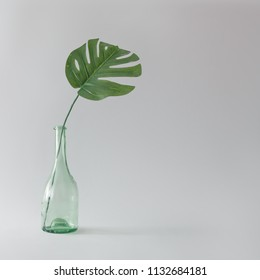 Green monstera leaf in glass bottle. Tropical still life concept. Minimal summer backround.