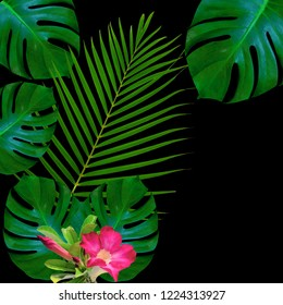 Green monstera leaves pattern for nature concept,tropical leaf textured background