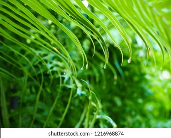 The green of the morning tree in the rainy season  Goodmorning