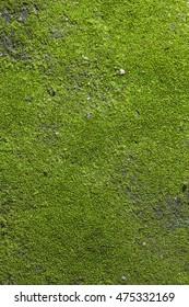 green mos