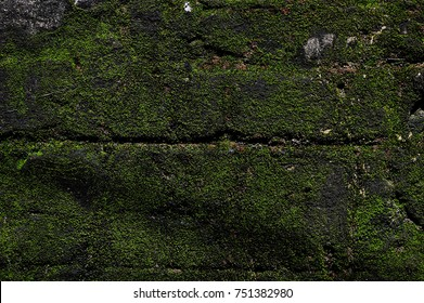 Green mos background, stone with green mos .