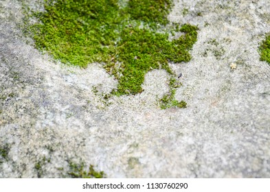Green mos on Stone background. Green mos background. stone with green mos . mos green grass.