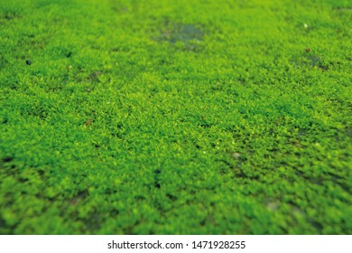 Green mos plant on floor background