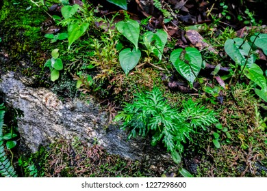 Green mos and small tree on Stone background with plant in nature