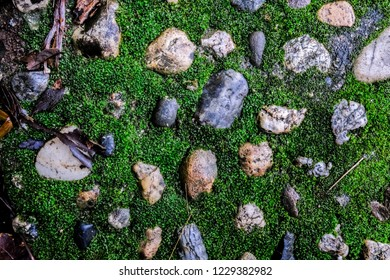 Green mos von Stone background with plant in nature