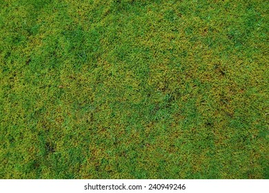 Green moss abstract nature background