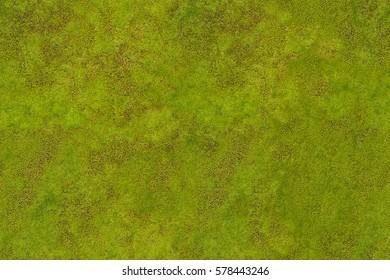 Green moss. Background seamless texture