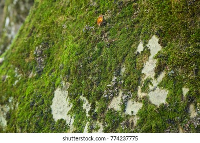 Green moss background with selective focus