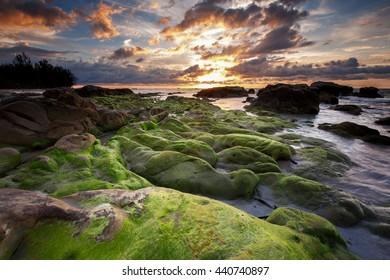green moss beach at Kudat Sabah Malaysia. image contain soft focus and blur.