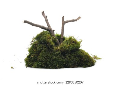 Green moss with branch isolated on white background