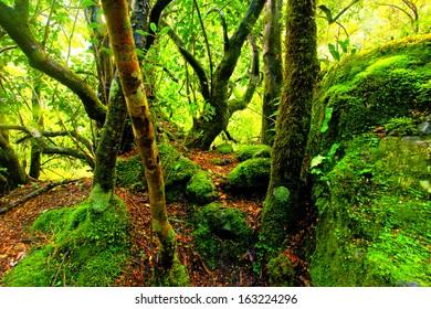 green moss covered rainforest path