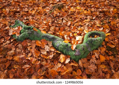 Green Moss Covered Tree Root Surrounded by Autumn Leaves
