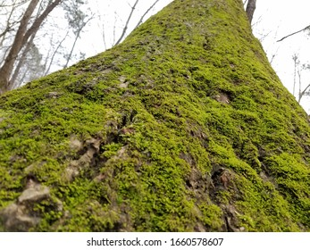 Green moss covered tree trunk bark horizontal perspective