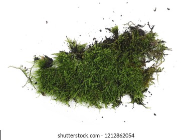 Green moss with dirt isolated on white background, top view
