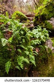 Green moss & ferns