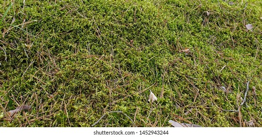 Green moss in the forest in summer on a sunny day
