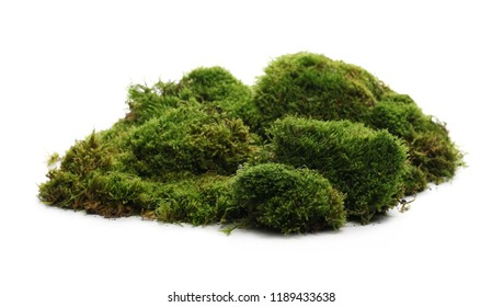 Green moss with grass isolated on white background
