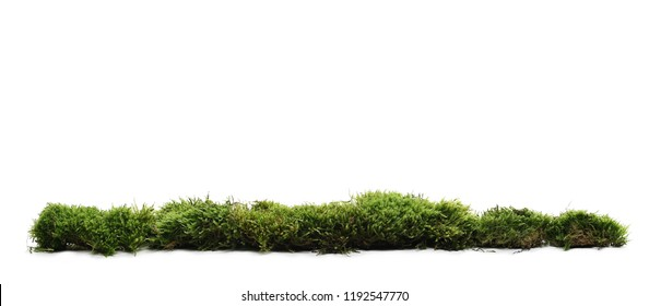Green moss with grass isolated on white background - Shutterstock ID 1192547770