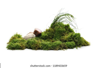 Green moss with grass and rocks isolated on white background