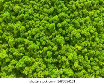 Green moss greenery texture, bump map, and background