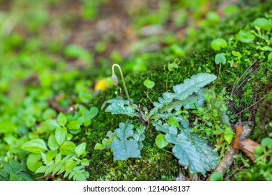 Green moss growing with a small flower catching attention. Moss texture surface, green moss background. Space to write in the background.