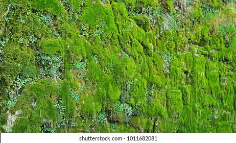 Green moss grows on the wall