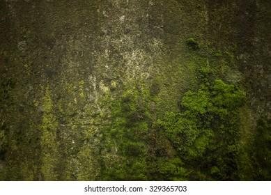 Green moss, grunge texture, background