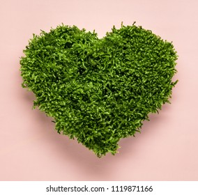 Green moss heart shape on pink background