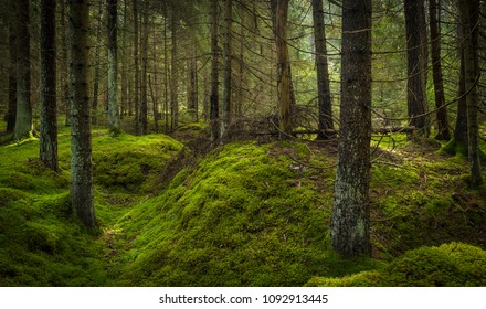 green moss inside of the forest