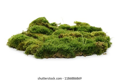 Green moss isolated on white background