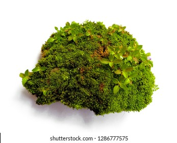 Green moss isolated on white bakground. Bright green moss