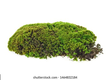 Green moss isolated on white background, closeup. Macro. Full focus.