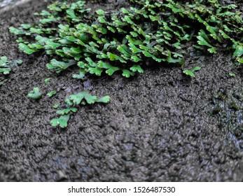 green moss macro shot on soft focus wet land