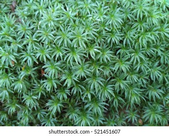Green moss natural background