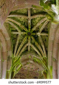 green moss on a cathedral ceiling