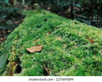 Green moss on decayed timber in the Phu Kradueng National Park.