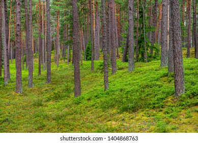 green moss on forestbed in mixed tree forest with tree trunks and green grass in summer. light from sun under the woods