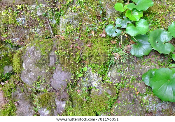 Green Moss On Ground Nature Outdoor Stock Photo Edit Now 781196851