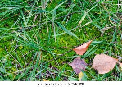 Green moss on the ground with some grass and red fallen autumn leaves.