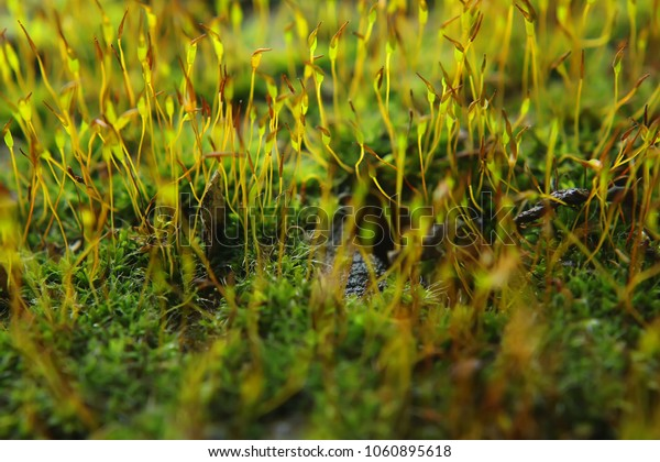 green moss on old masonry. natural background.