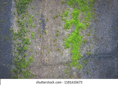 Green moss on the old wall texture