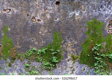 Green Moss on Old Wall Background.