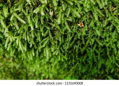 green moss on rock